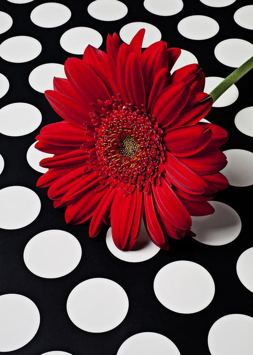 Red Greeting Card featuring the photograph Red Mum With White Spots by Garry Gay