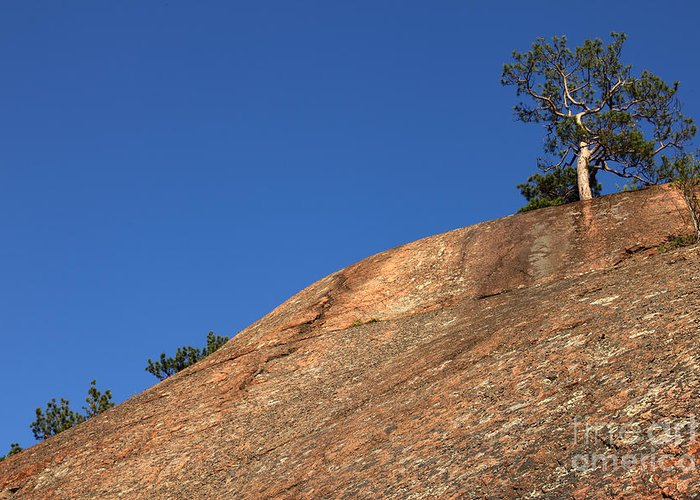 Granite Bedrock Greeting Card featuring the photograph Red Pine Tree by Ted Kinsman