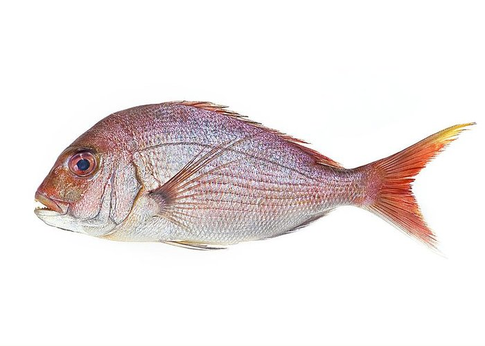 Red Sea Bream Greeting Card featuring the photograph Red Sea Bream by David Nunuk