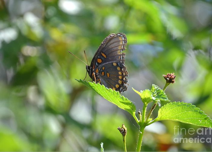 Butterfly Greeting Card featuring the photograph Red Spotted Purple Butterfly by Kathy Gibbons