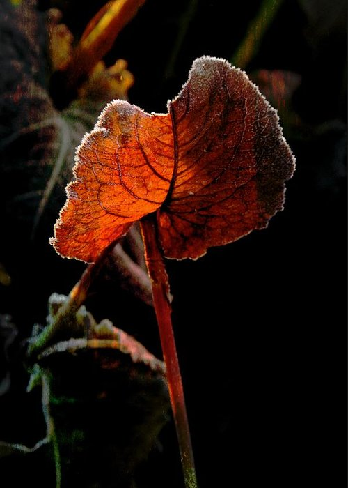 Leaf Greeting Card featuring the photograph Red Wing by Odd Jeppesen