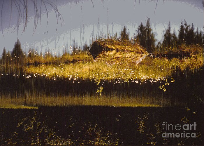 Photo Greeting Card featuring the photograph Reflection by Alcina Morello