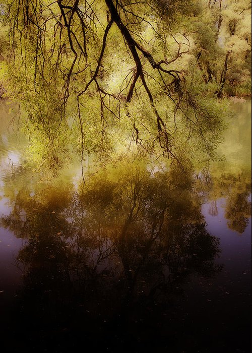 Summer Greeting Card featuring the photograph Reflection by Joana Kruse