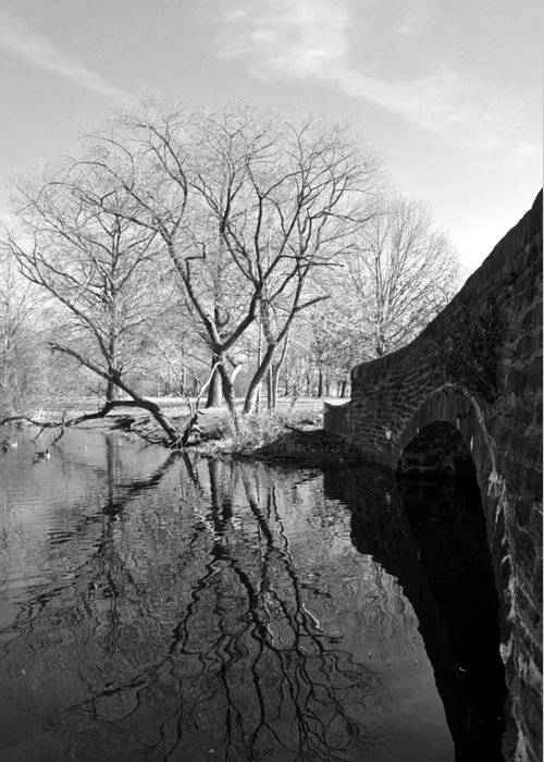 Fdr Park Greeting Card featuring the photograph Reflections Of Natural Beauty by Andrew Dinh