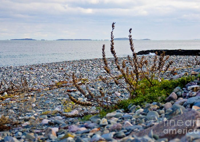 New England Coast Greeting Card featuring the photograph Relax by Extrospection Art