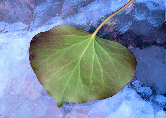 Reverse Ivy On Blue Greeting Card featuring the photograph Reverse Ivy On Blue by Beth Akerman