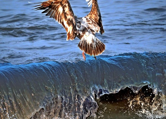 Seagulls Greeting Card featuring the photograph Riding The Wave by Debra Miller