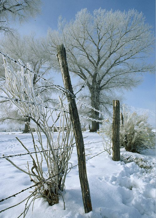Barbed Wire Greeting Card featuring the photograph Rime From Rare Fog Coats Fence by Gordon Wiltsie