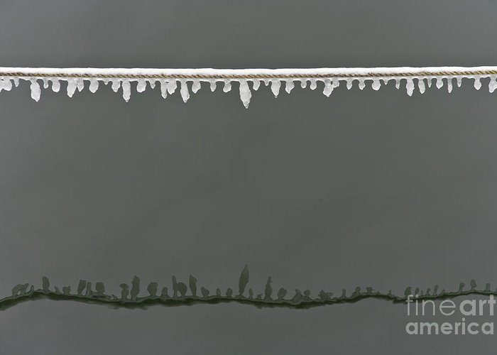 Winter Greeting Card featuring the photograph Rimy Rope 2.1 by Heiko Koehrer-Wagner