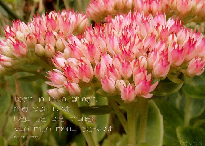 Nature Greeting Card featuring the photograph Ring Van Rust by Yvon van der Wijk