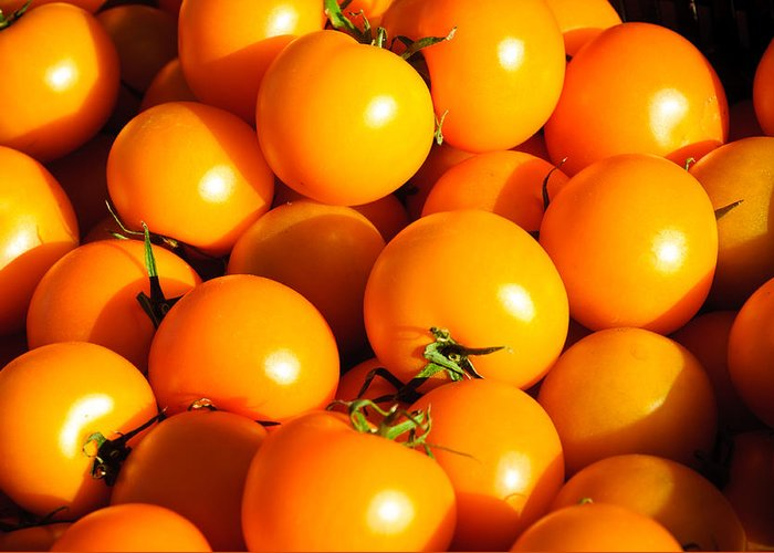 Harvest Greeting Card featuring the photograph Ripe Yellow Tomatoes by Connie Cooper-Edwards
