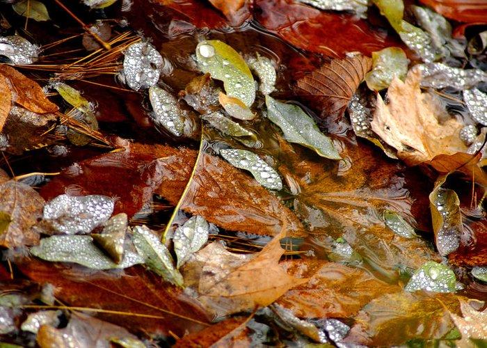 Usa Greeting Card featuring the photograph River Leaves by LeeAnn McLaneGoetz McLaneGoetzStudioLLCcom