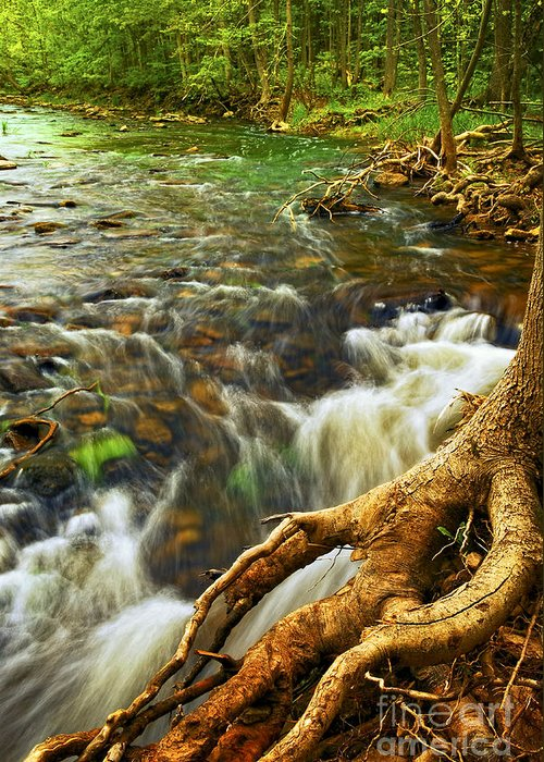 Water Greeting Card featuring the photograph River Rapids by Elena Elisseeva