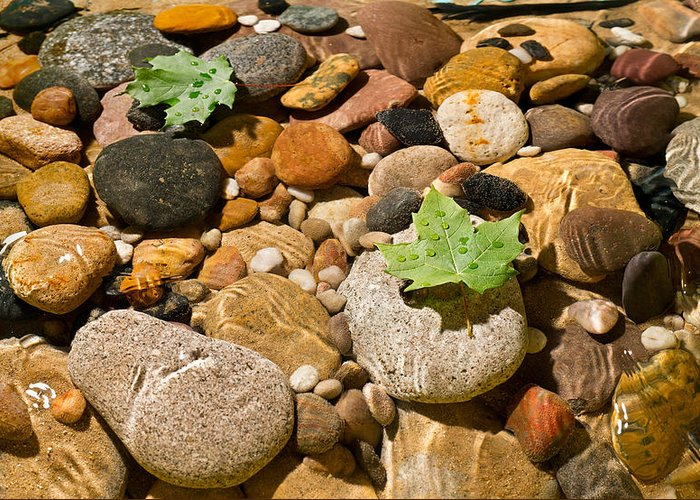 Maple Greeting Card featuring the photograph River Stones by Steve Gadomski