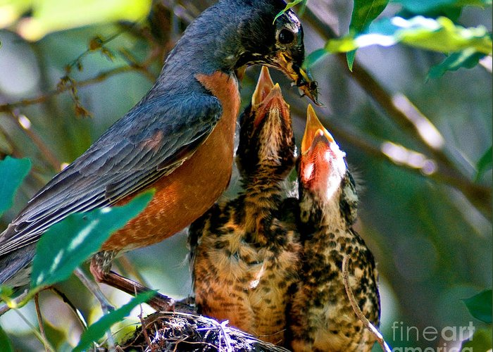 Robin Greeting Card featuring the photograph Robin Feeding Young 2 by Terry Elniski