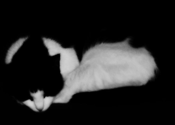 Cat Greeting Card featuring the photograph Rockie in black and white by Joseph Ferguson
