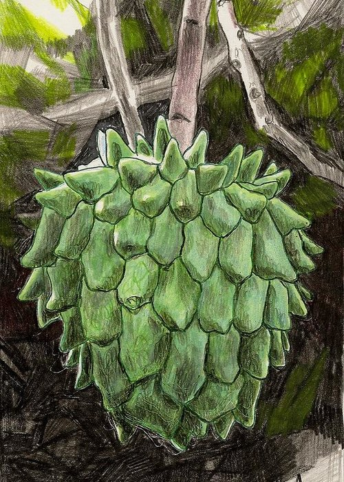 Fruit Greeting Card featuring the drawing Rollinia by Steve Asbell