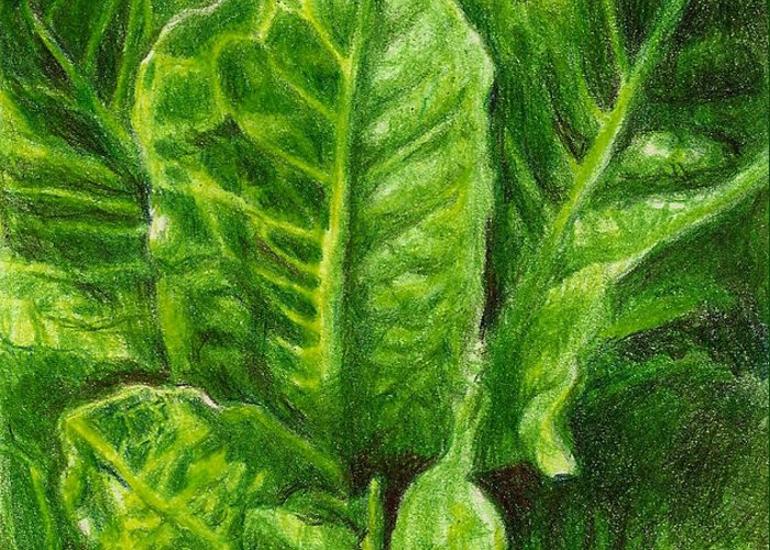 Lettuce Greeting Card featuring the photograph Romaine Unfurling by Steve Asbell