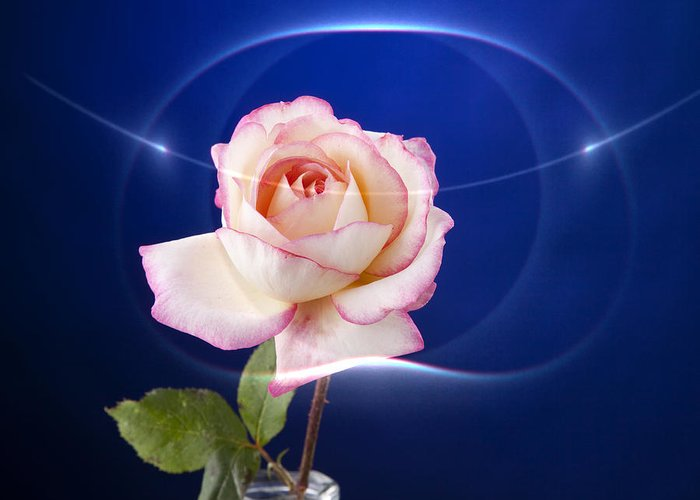 Rose Greeting Card featuring the photograph Romance Rose by M K Miller