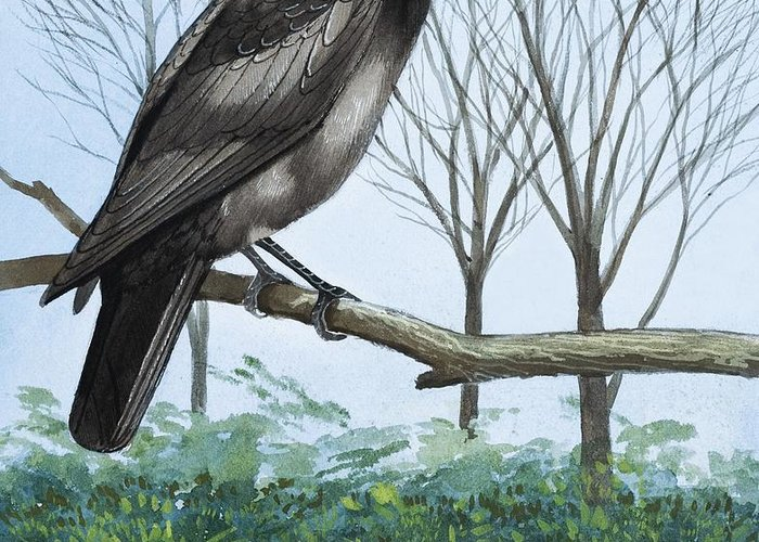 Rook; Rooks; Rookery; Nest; Tree; Flock; Ornithology Greeting Card featuring the painting Rook by English School