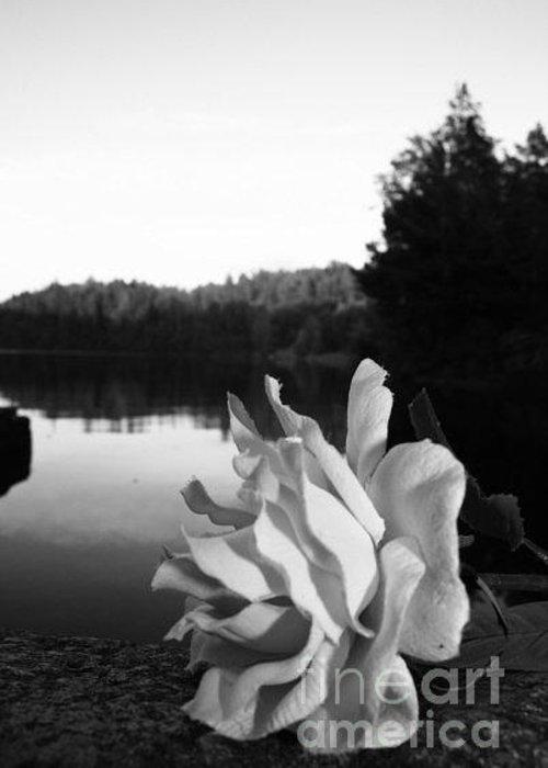 Still Life Of A Rose. In Svartviken Greeting Card featuring the photograph Rose Awakening by Derya Aktas