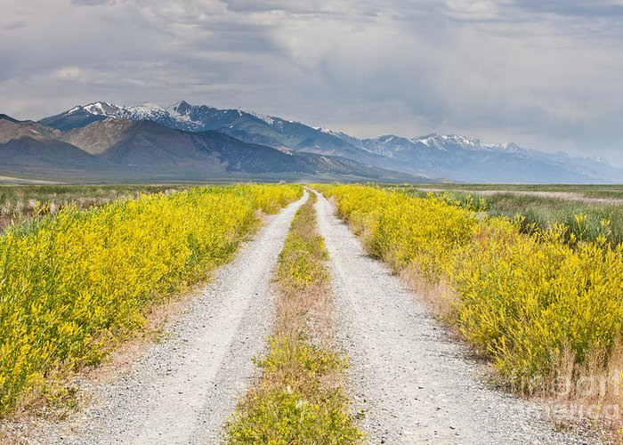 Landscape Greeting Card featuring the photograph Ruby Mountains Wildflower Road by Sheri Van Wert