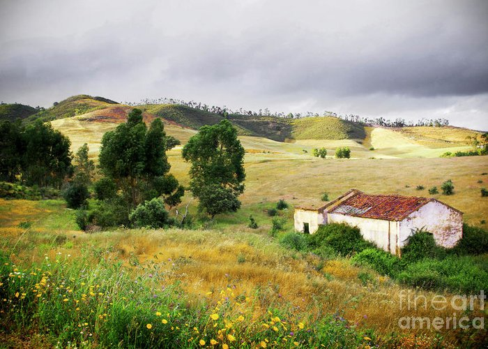 Calm Greeting Card featuring the photograph Ruin In Countryside by Carlos Caetano