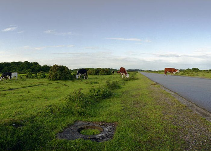 Raf Greeting Card featuring the photograph Runway Light With Cows by Jan W Faul