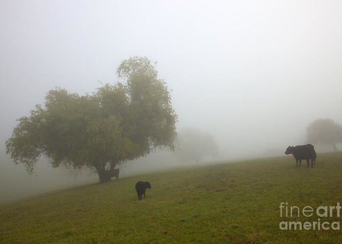 Fog Greeting Card featuring the photograph Rural Fog by Mike Dawson