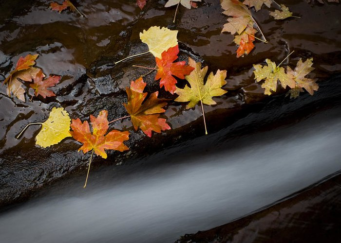 Subway Greeting Card featuring the photograph Rushing Autumn by Jim Speth