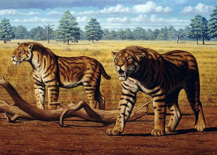 Sabre-toothed Cat Greeting Card featuring the photograph Sabre-toothed Cats, Artwork by Mauricio Anton
