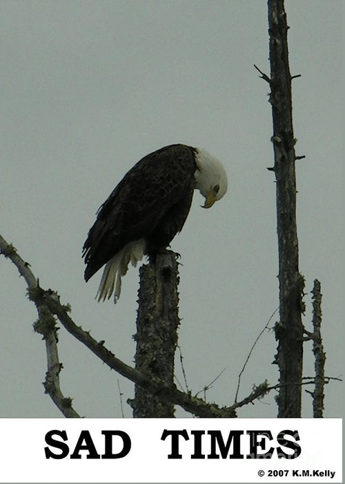 Eagle Greeting Card featuring the photograph Sad Times by Kevin Kelly