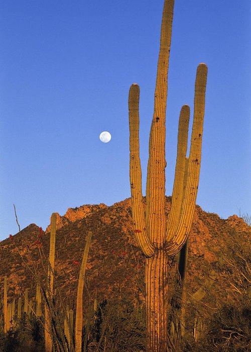 Mp Greeting Card featuring the photograph Saguaro Carnegiea Gigantea Cactus by Konrad Wothe