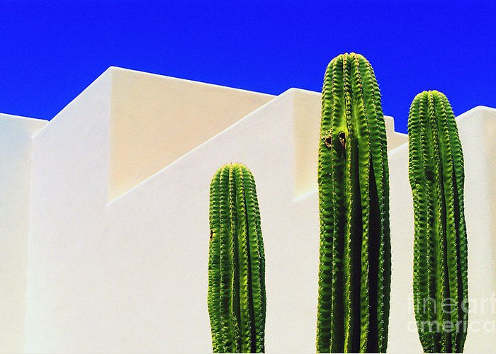 Cactus Greeting Card featuring the photograph Saguaros by Gib Martinez