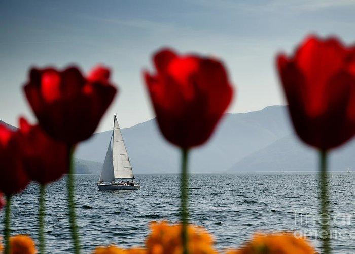 Sailing Boat Greeting Card featuring the photograph Sailing Boat And Tulip by Mats Silvan