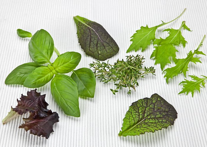 Basil Greeting Card featuring the photograph Salad Greens And Spices by Joana Kruse