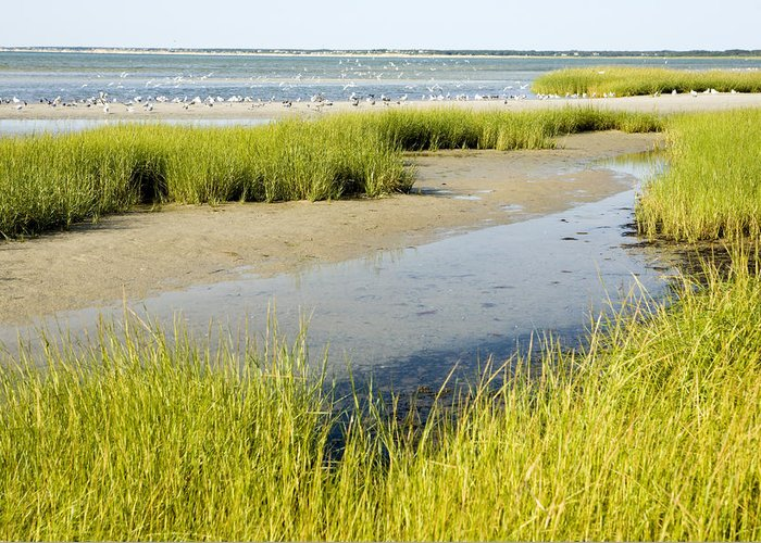 Landscapes Greeting Card featuring the photograph Salt Marsh Habitat With Flock Of Birds by Tim Laman