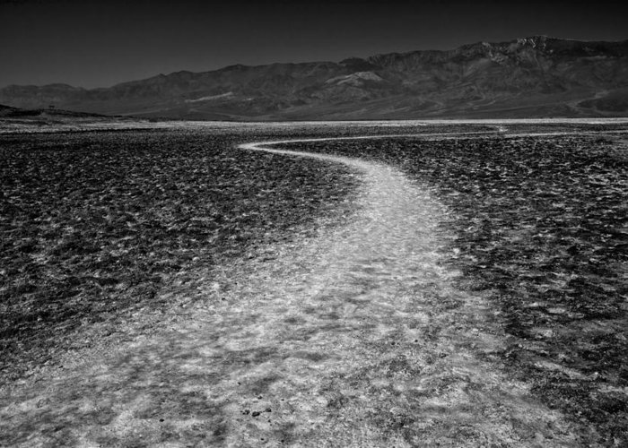 Badwater Greeting Card featuring the photograph Salt Road by Matt Trimble