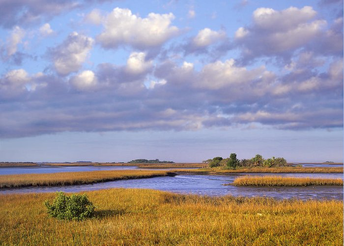 00175847 Greeting Card featuring the photograph Saltwater Marshes At Cedar Key Florida by Tim Fitzharris