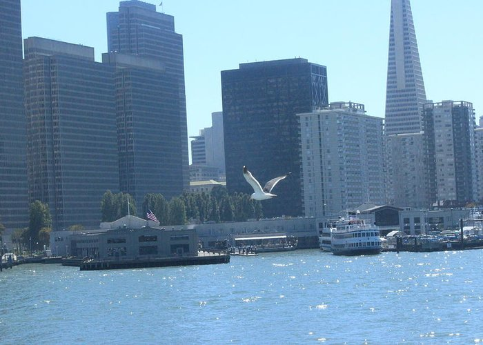Seagull Greeting Card featuring the photograph San Francisco Collection #21 by Raquel Amaral