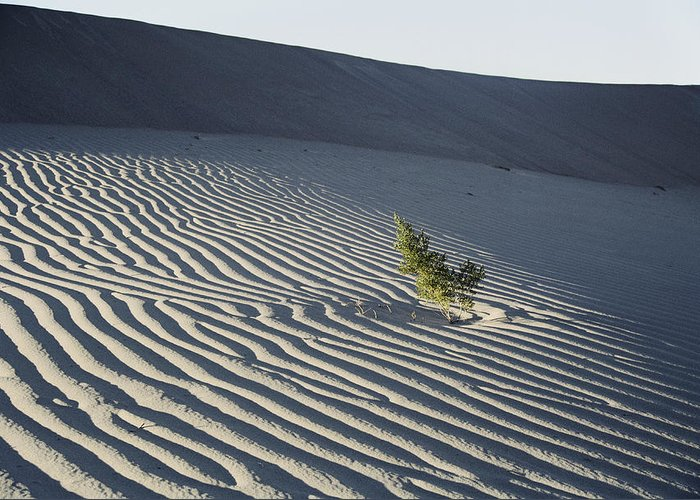 Sand Greeting Card featuring the photograph Sand Dunes, Death Valley, California by Marc Moritsch