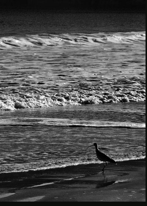 Sandpiper Greeting Card featuring the photograph Sandpiper In The Surf Hc by Philip Osterkamp