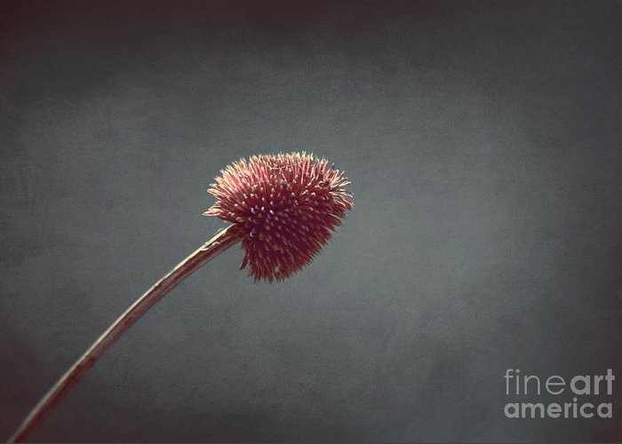 Plant Greeting Card featuring the photograph Sans Nom - S03at01b by Variance Collections