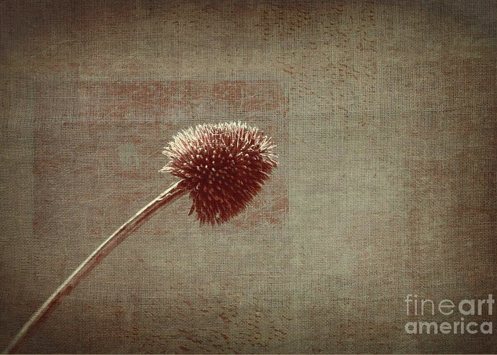 Plant Greeting Card featuring the photograph Sans Nom - S03p11t05 by Variance Collections