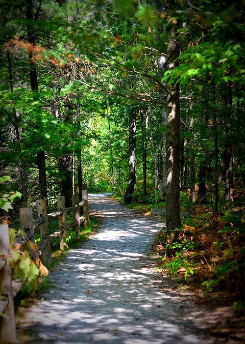 Paths Greeting Card featuring the photograph Scenic Pathway by Jennifer King