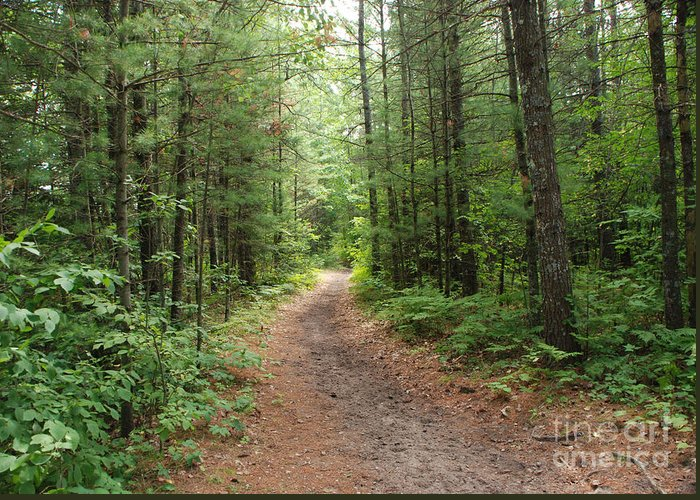Huron National Forest Greeting Card featuring the photograph Scenic Walk by Grace Grogan