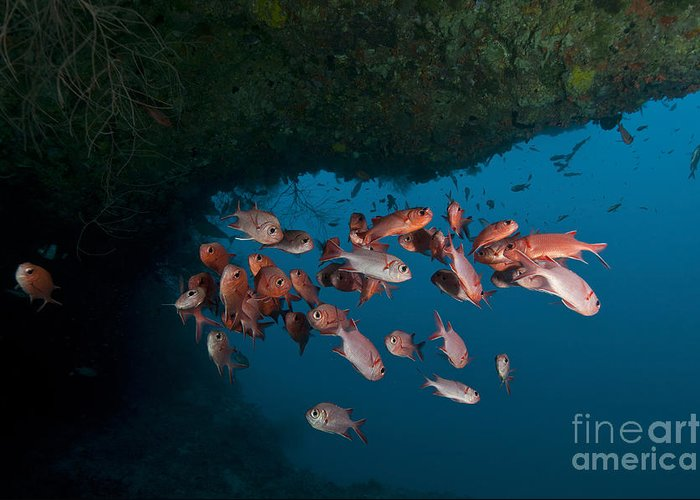 Maldives Greeting Card featuring the photograph School Of Red Bigeye Under A Rocky by Mathieu Meur