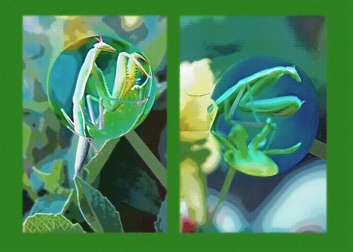 Praying Mantis Greeting Card featuring the photograph Science Class Diptych - Praying Mantis by Steve Ohlsen