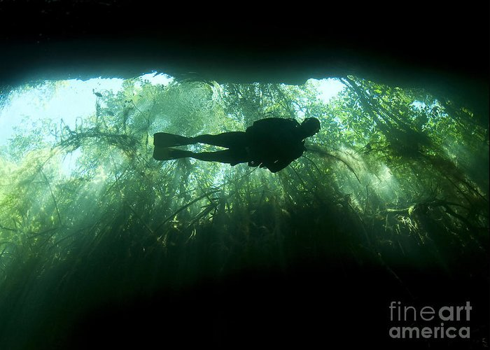 Cavern Greeting Card featuring the photograph Scuba Diver In The Cavern Part by Karen Doody