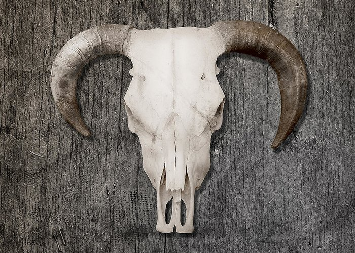 Animal Skull Print Greeting Card featuring the photograph Scull by Stephen Walker
